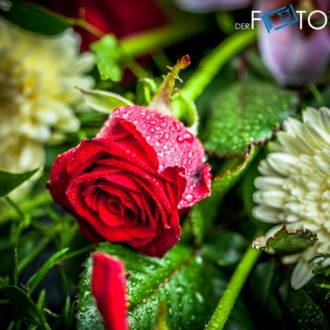 Hochzeit-Angela-Henning-2013-0549