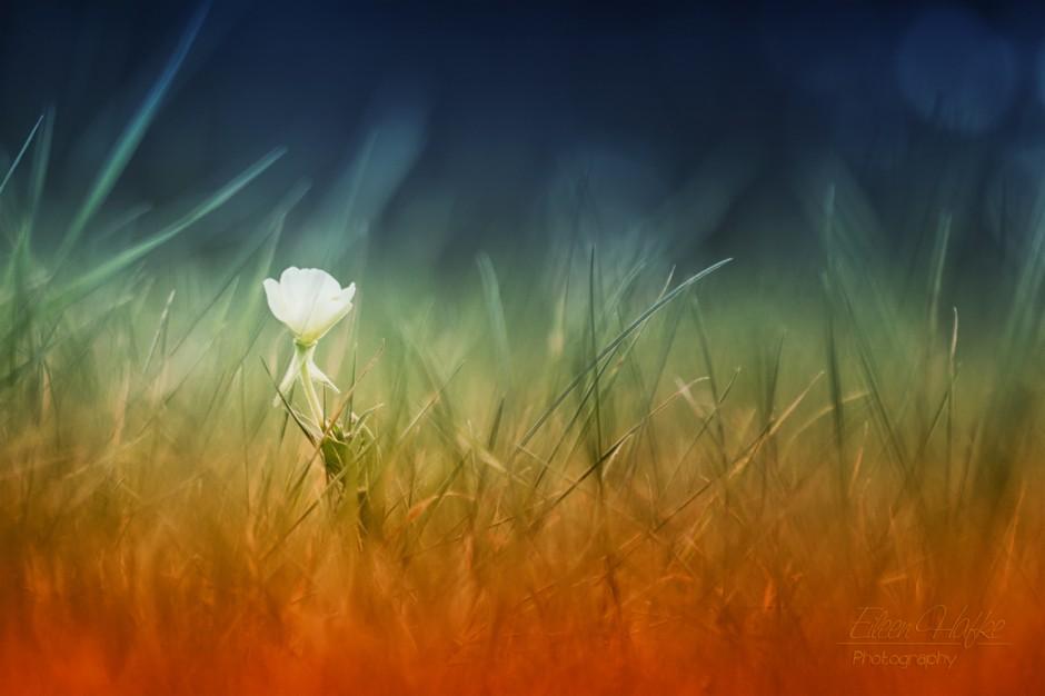 Makrofotografie-Gras-Und-Blume-Eileen-Hafke